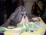 WORLD  WINNER  DOG  2009